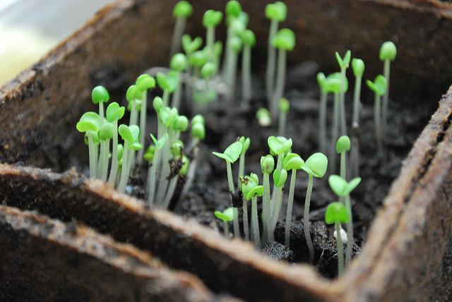 túlöntözés tápoldatozás NPK-arány trágyázás tájjellegű zöldségek és gyümölcsök őshonos zöldségek és gyümölcsök invazív növények ágyások kialakítása kártékony kerti rovarok