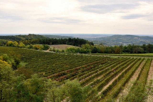szekszárd bor