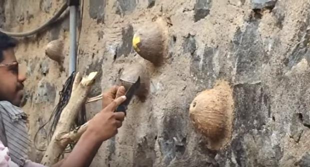 méhészkedés fal kókusz héj