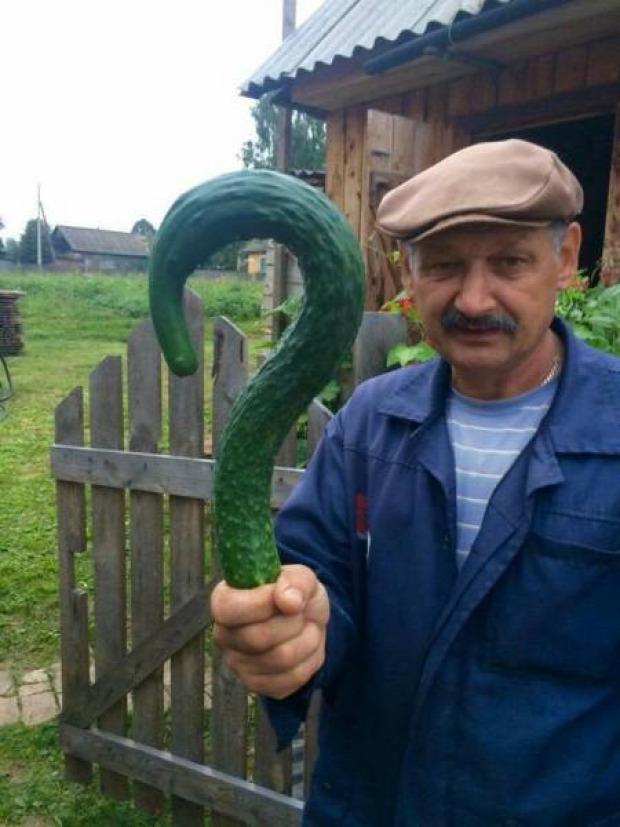 Hétvégi dizájn uborka