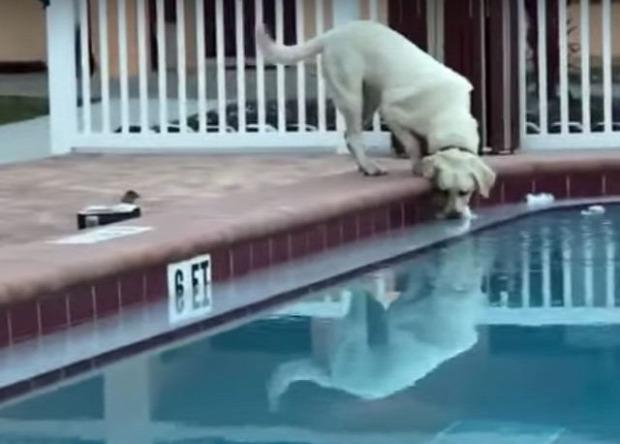 kutya  sör