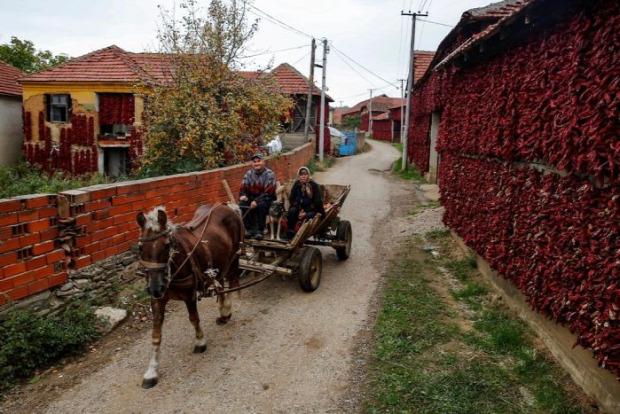Dizájn szerbia paprika falu főváros