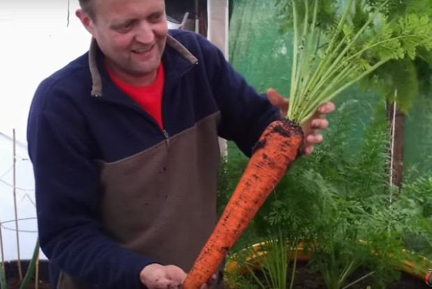 videó kertész répa