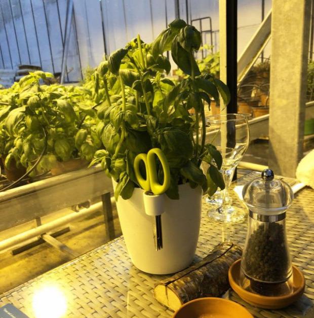 Hétvégi dizájn fűszernövény cserép olló