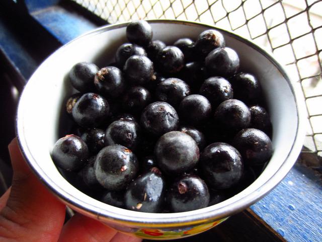 superfood tél ősz lenmag omega-3 zsírsav fodros kel acai lenmagolaj smootie turmix