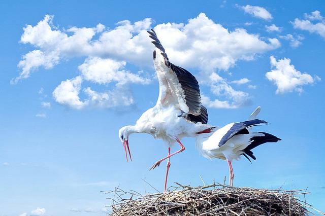 gólya madár tavasz időjárás meteorológia