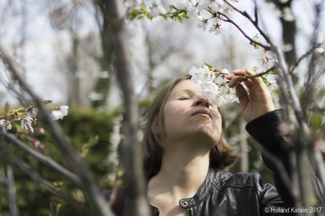 Tavasz virág cseresznyefa Sakura Eötvös Loránd Tudományegyetem Fűvészkert fenológia kökörcsin