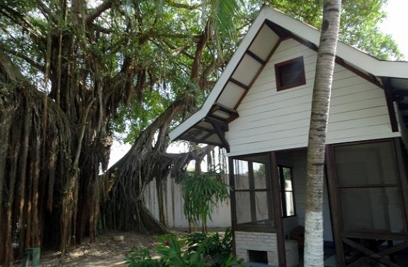 A nagyszülői ház és a fa, amihez kikötötték José Arcadio Buendíát