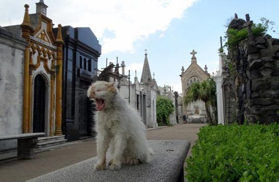 A sátán macskái ijesztegetik a turistákat