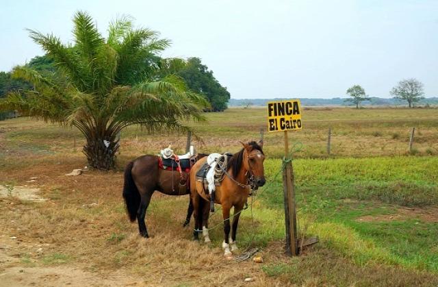 Kolumbia Los Llanos Paz de Ariporo El Totumo