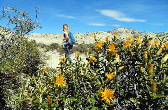 Szép virágok közt túrázunk a Bryn Gwyn Paleontológiai Parkban