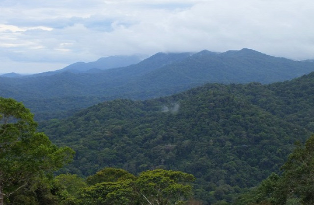 A Guna Yala szárazföldi területén érintetlen az esőerdő