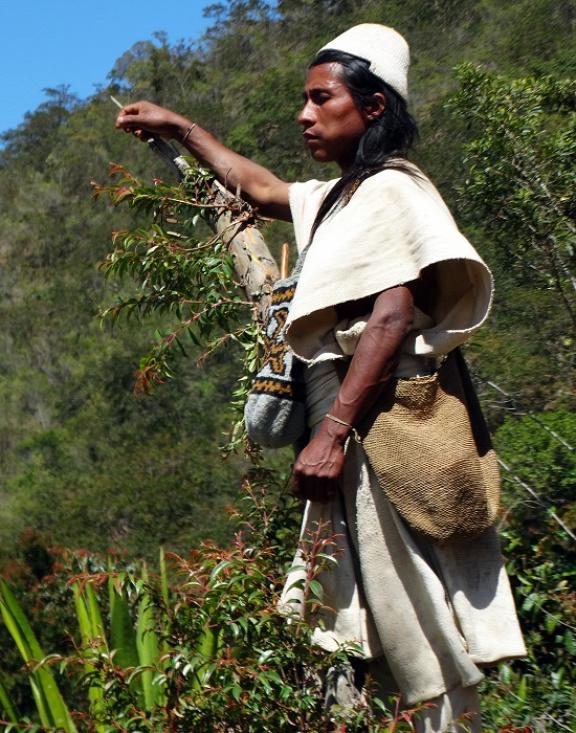 Fiatal arhuaco a hegyoldalban