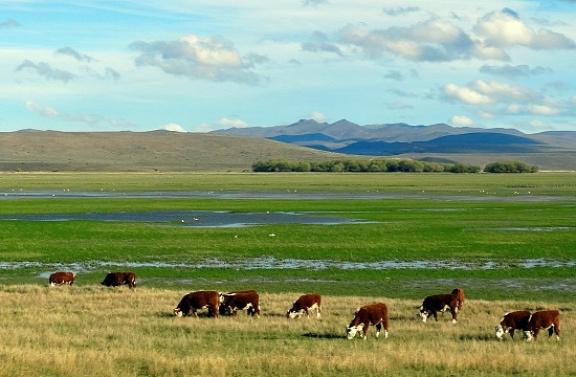 Esquel környékén még vannak legelők, aztán azok is megszűnnek