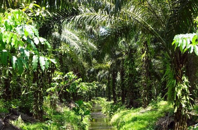 Panama Costa Rica David Piedras Blancas Nemzeti Park