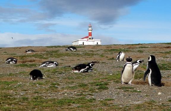 Világítótorony és egy halom pingvin