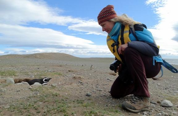 Egész közel engednek magukhoz a pingvinek