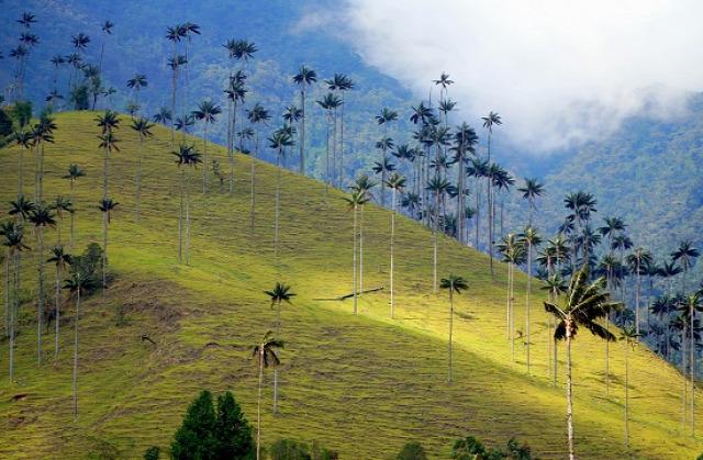 Kolumbia Salento Cocora-völgy