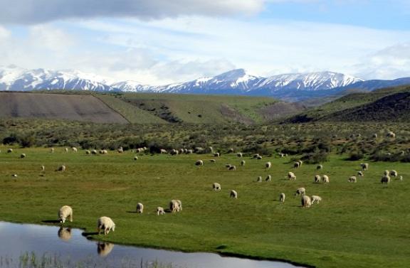 Legelő valahol Puerto Natales és a Torres del Paine között