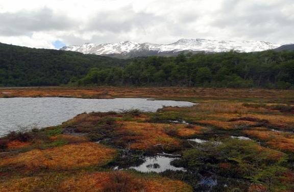A déli félteke tundráinak 99%-a Tűzföldön található