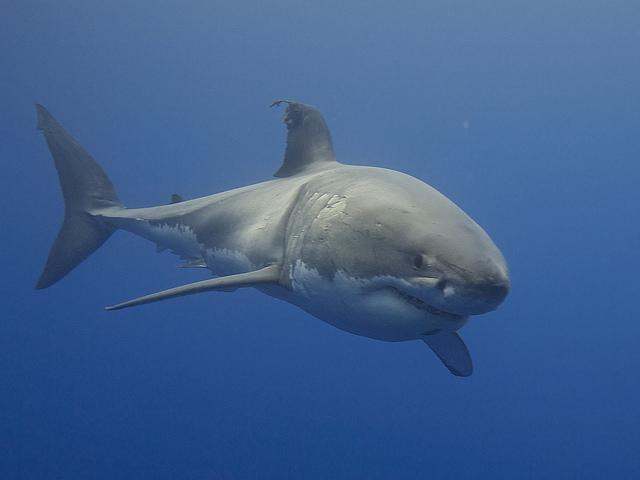 cápa környezetvédelem