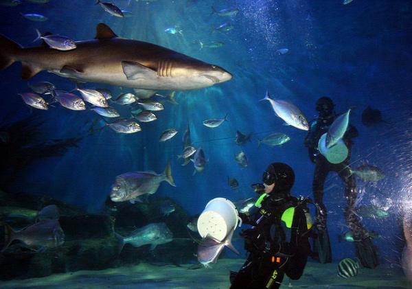 cápa sztori