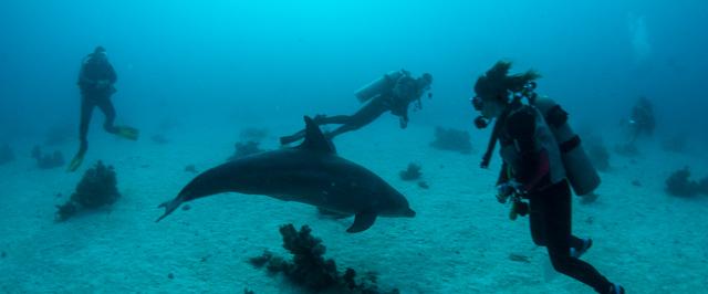 delfin szafari2016