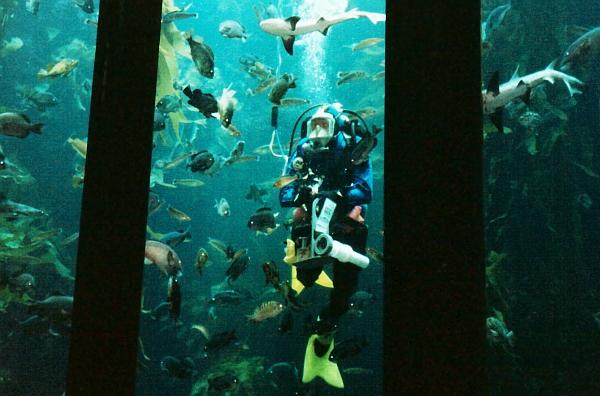 sztori akvárium