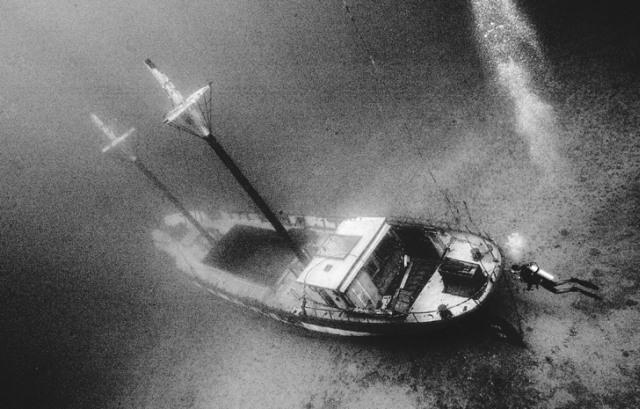 roncs bálna