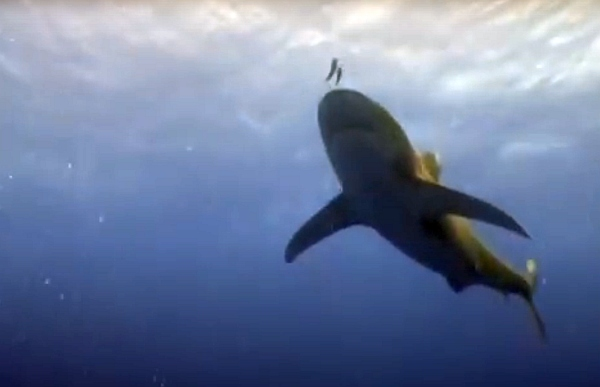 sztori cápa egyiptom