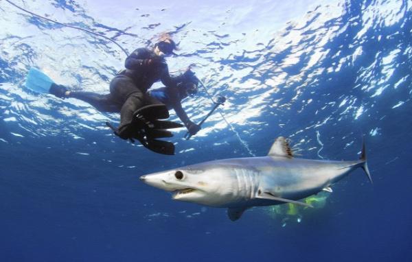 cápa baleset