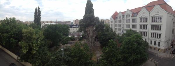 jegenyefa jegenyenyár év fája Újlipótváros XIII. kerület Budapest