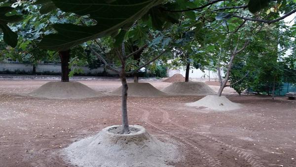 park kert közpark Erzsébetváros Nagydiófa utca
