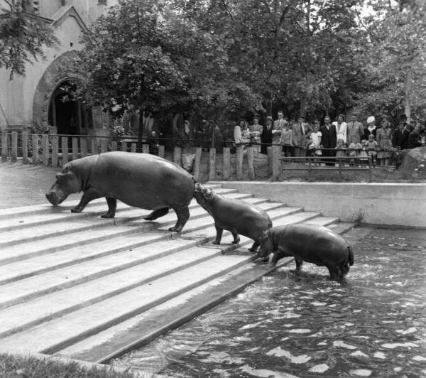 Budapest Állatkert 150 éves születésnap Fővárosi Állatkert