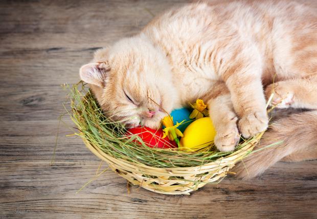 húsvét nyúl tojás