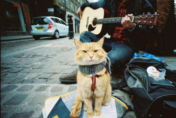 zenész utca kóbor