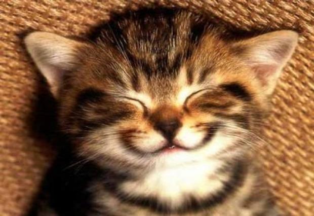 mosoly vigyor
