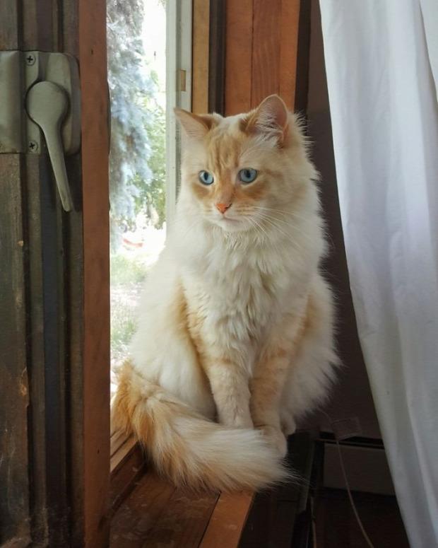 hercegnő ablak