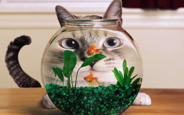 gömb akvárium aranyhal