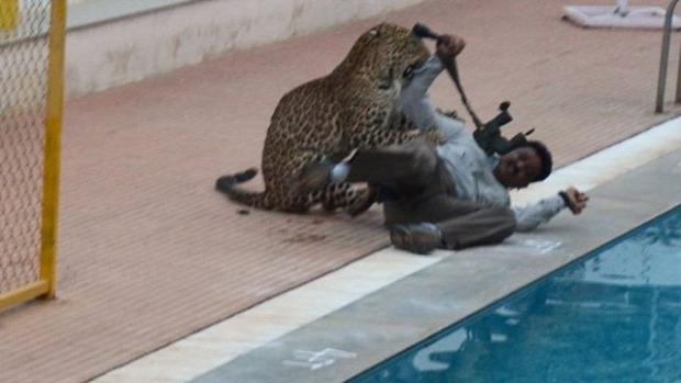 India leopárd iskola