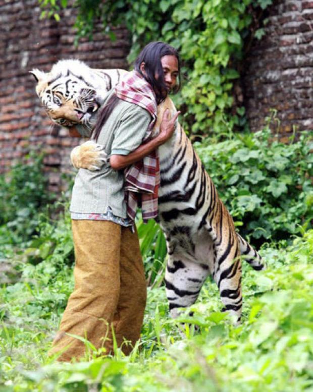 Indonézia bengáli tigris