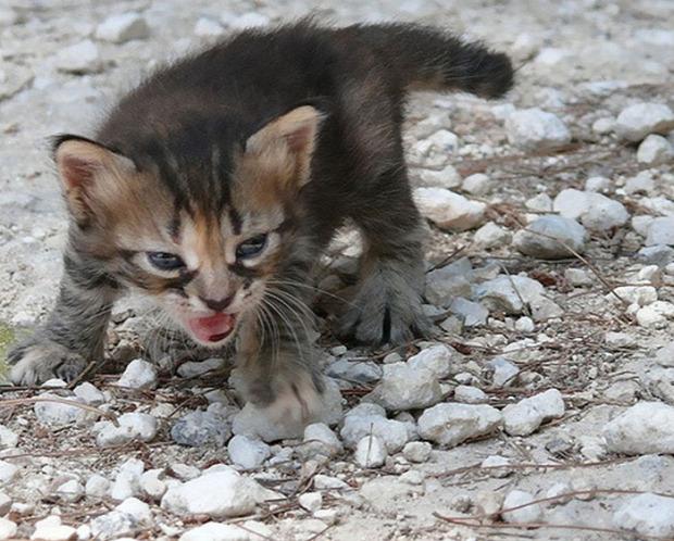 dühös mérges