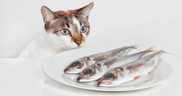 étel néz lop kaja figyel