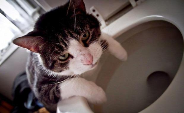 másnapos macskajaj