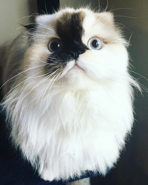 instagram sztár Smudge Piszok himalájai
