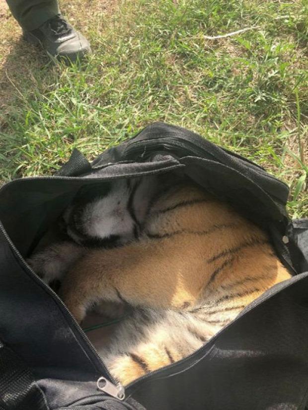 határőr csempész táska tigris