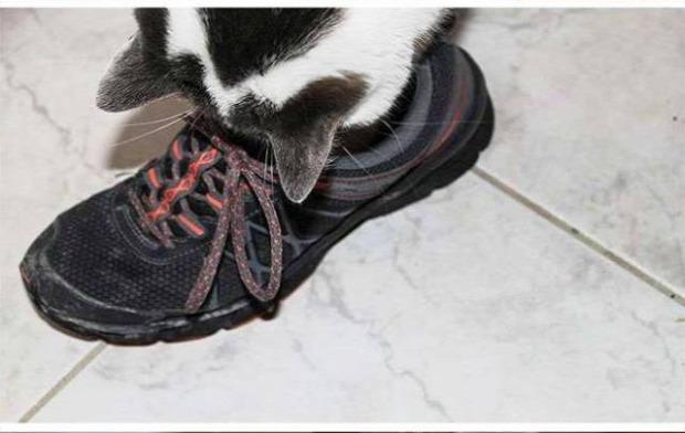 bosszú cipő tűző tüske