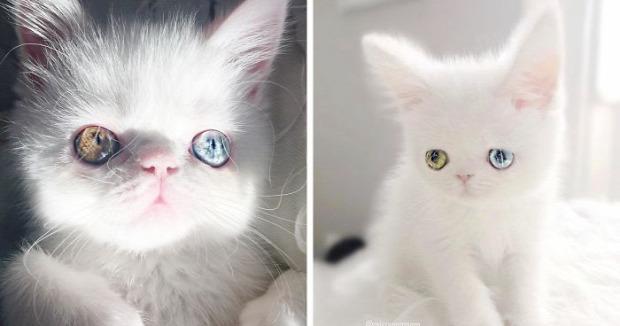 szem Pam-Pam genetikai elváltozás heterochromia