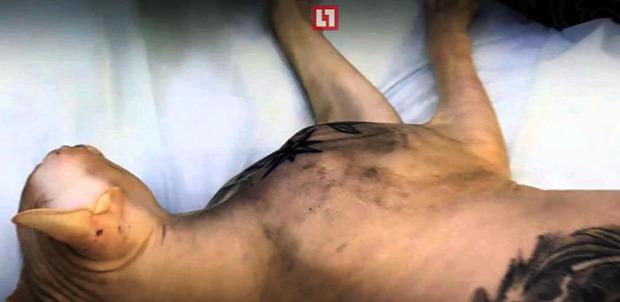 szfinx tetoválás orosz