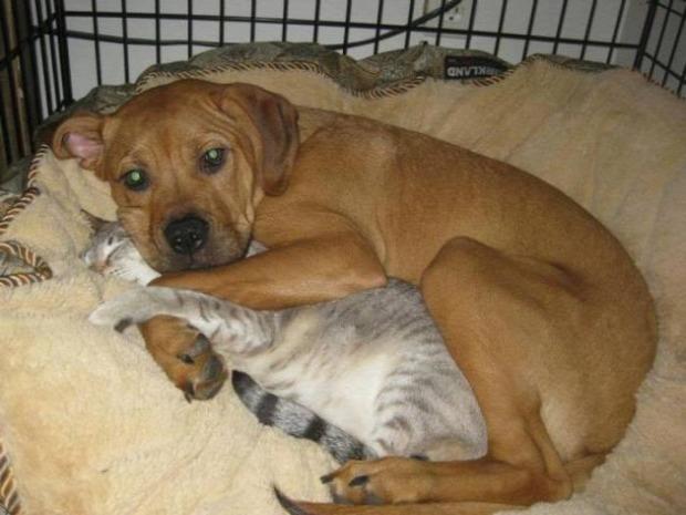 kutya barátság